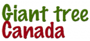Giant Tree Canada Inc